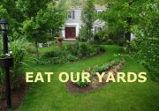 eat our yards image