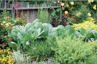 diy edible landscaping brunswick downtown association