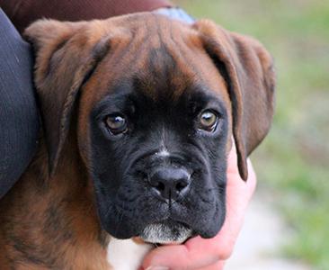 puppy sm