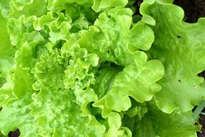 Winter Garden Workshop - Indoor Gardening for Year-Round Salad