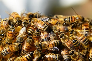 Crystal Spring Farm Bee Tour