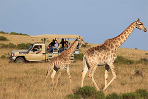 "FYI: ""Let's Take a Safari"""
